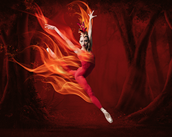 More Info for Miami City Ballet: Firebird