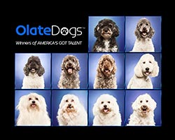 More Info for Winners of America's Got Talent The Olate Dogs Come To The Broward Center